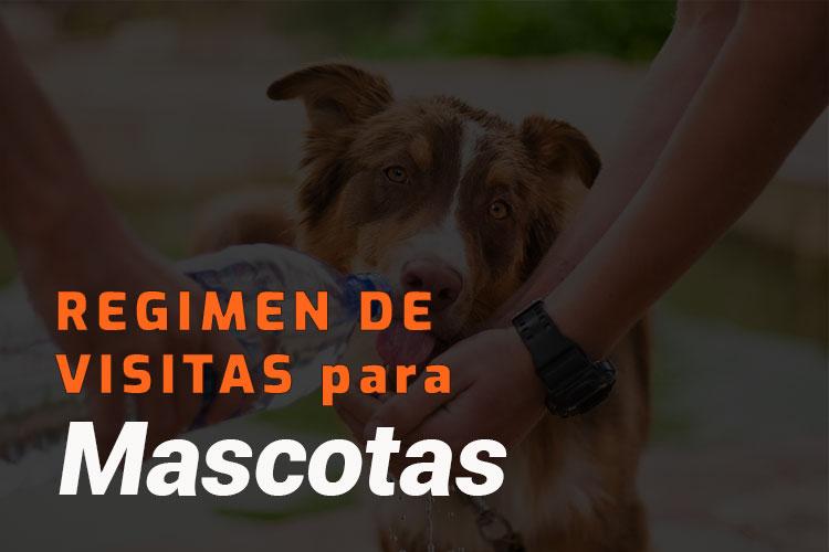 regimen visitas mascotas imagen